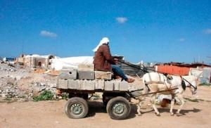 article palestine